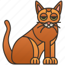breed, cat, chausie, feline, playful icon