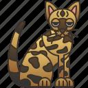 cat, egyptian, feline, mau, purebred