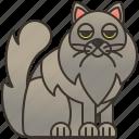 cat, cute, fluffy, nebelung, pet