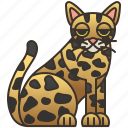 cat, feline, hybrid, safari, spotted
