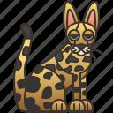 cat, hunter, pet, playful, savannah