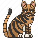 cat, feline, striped, tabby, toyger