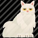 beautiful, cat, chinchilla, fluffy, longhair icon