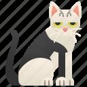 cat, celtic, european, purebred, shorthair icon