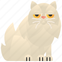 adorable, cat, faced, peke, persian icon