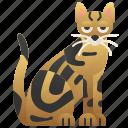 cat, kenya, pedigree, sokoke, tabby icon