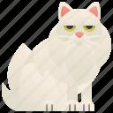 adorable, cat, fluffy, longhair, tiffanie icon