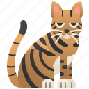 cat, feline, striped, tabby, toyger icon