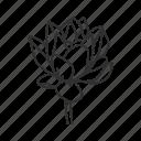 lotus, buddhism, flower, lotus flower