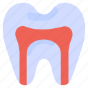 anatomy, canal, dentist, health, medical, root, tooth
