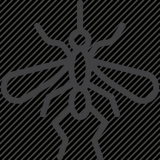 Gnat, mosquito, malaria icon