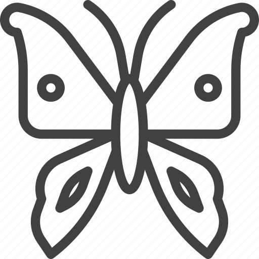 Butterfly, moth, wing icon - Download on Iconfinder
