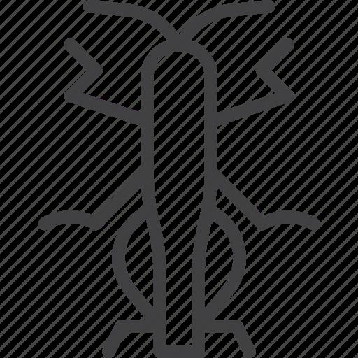 grasshopper, insect, locust icon