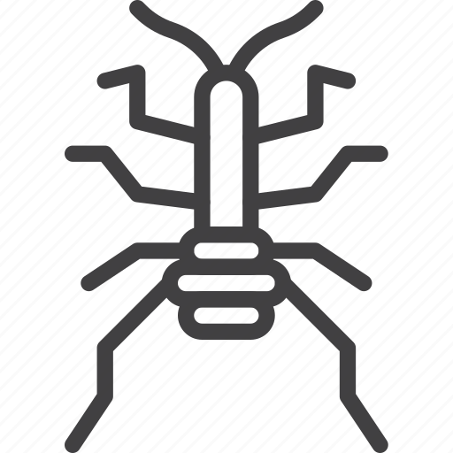 bug, insect, weevil icon