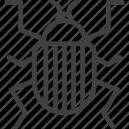 beetle, bug, colorado icon