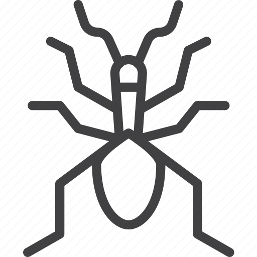 beetle, bug, ground, insect icon