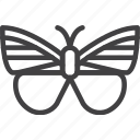 butterfly, moth, insect, wing