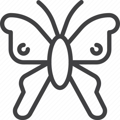 butterfly, insect, moth icon