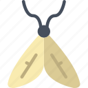 bug, insect, moth, nature