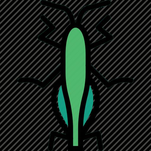 bug, grasshopper, insect, nature icon