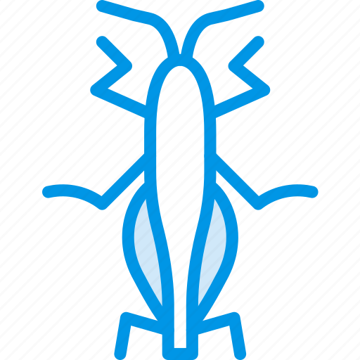 bug, grasshopper, insect, nature icon