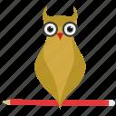 teacher, smart classes, owl teacher