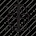 brain, cranium, human head, nervous system, neurology