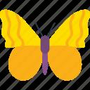butterfly, butterfly specie, butterfly tattoo, fluttering butterfly, orange barred sulphur butterfly icon