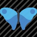 butterfly, butterfly specie, butterfly tattoo, cattleheart butterfly, fluttering butterfly icon