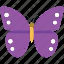 butterfly, butterfly specie, buzz midnight, fluttering butterfly, purple emperor butterfly icon