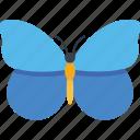 butterfly, butterfly specie, buzz midnight, fluttering butterfly, lepidoptera butterfly icon