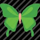 butterfly, butterfly specie, butterfly tattoo, fluttering butterfly, swallowtail butterfly icon