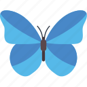 blue morpho butterfly, butterfly, butterfly specie, butterfly tattoo, fluttering butterfly icon