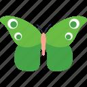 butterfly, butterfly specie, butterfly tattoo, fluttering butterfly, green clipper butterfly icon