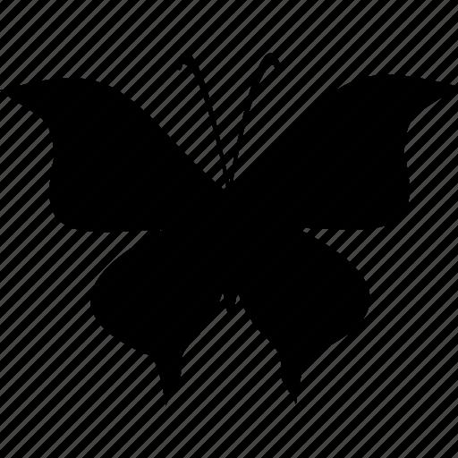 butterfly, flight, wings icon