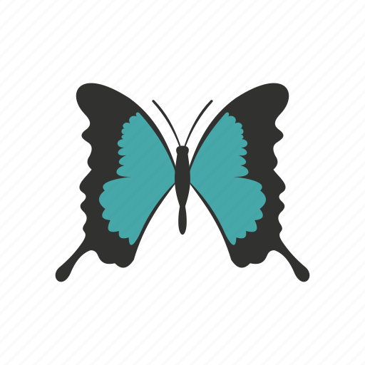 butterfly, decoration, long, spring, summer, wing, wings icon