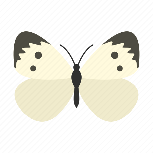 Butterfly, decoration, pattern, spring, summer, wing, wings icon - Download on Iconfinder