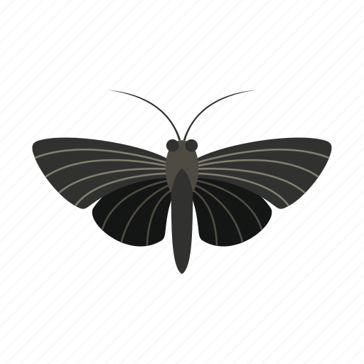 butterfly, decoration, small, spring, summer, wing, wings icon