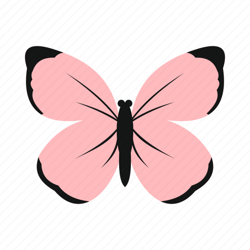 butterfly, colorful, insect, nature, pink, spring, wing icon