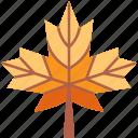 autumn, fall, leaf, leaves, maple, nature, season