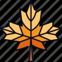 autumn, fall, leaf, leaves, maple, nature, season icon