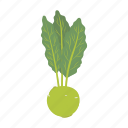 cabbage, food, kohlrabi, leaf, swing, vegetable icon