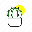 fourteen, cactus, planty, plants, plantyplace, plant