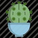 bishops, cap, cactus