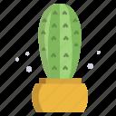 blue, columnar, cactus