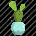 bunny, ear, cactus