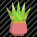 cactus, zebra
