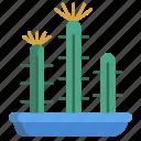 fairy, castle, cactus
