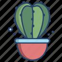star, cactus
