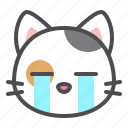 avatar, calico, cat, cry, cute, face, kitten